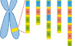 Verschillende vormen van genetische variatie