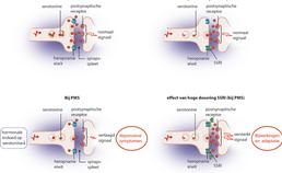 Activiteit van het serotonerge systeem (pms)