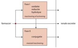 Schematische weergave van het metabolisme (biotransformatie)