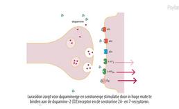 Animatie over lurasidon en CYP3A4