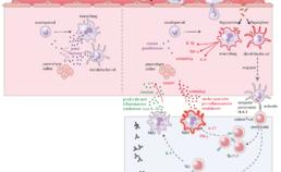 De normale werking van het immuunsysteem